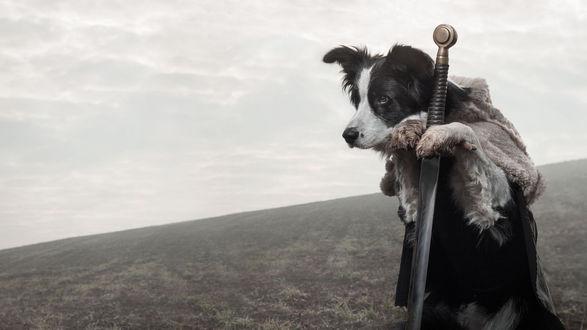 Обои Пес стоит на задних лапах, одетый в черную одежду с меховым воротником и опираясь передними лапами на меч