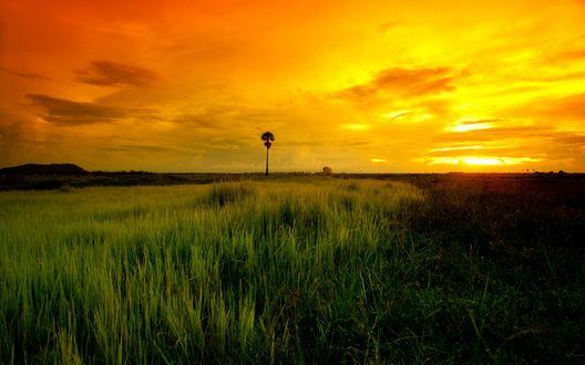 Обои Одиноко стоящее дерево в зеленом поле и красивое небо