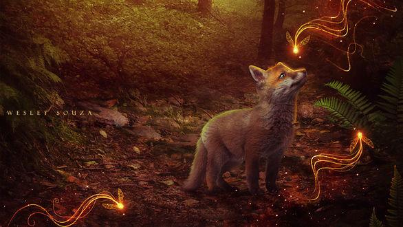 Обои Маленький лисенок стоит в лесу и смотрит на светящихся мотыльков, by Wesley Souza