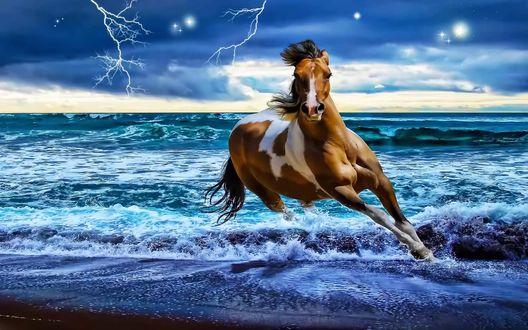 Обои Конь резвится на берегу моря, перед наступающей бурей