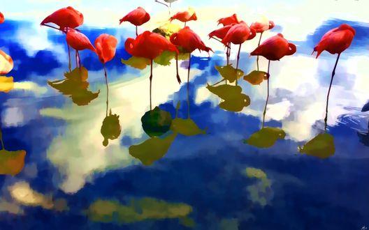 Обои Красные пеликаны стоят в воде, отражаясь вместе с облачным небом, by Serjoga Vu