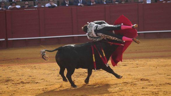 Обои Коррида Национальная испанская традиция