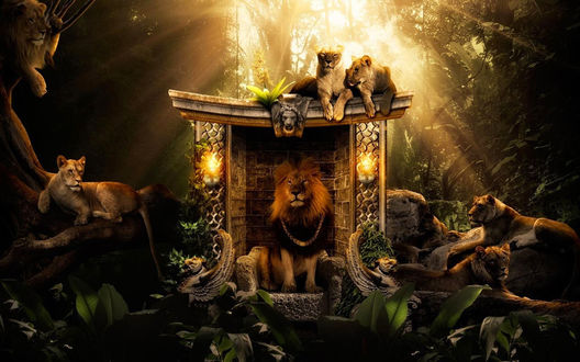 Обои Лев Царь зверей сидит на троне, в окружении своего прайда