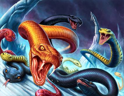 Обои Нападение разноцветных разозленных змей