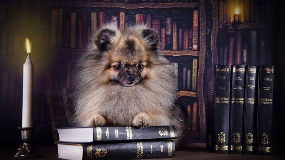 Обои Щенок положил передние лапы на стопку книг, рядом горит свеча