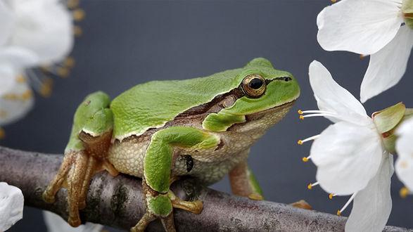 природа цветы животное лягушка  № 3068577 бесплатно