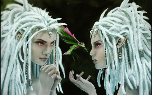 Обои Две девушки эльфийки с дредами и между ними летает красивая разноцветная птичка