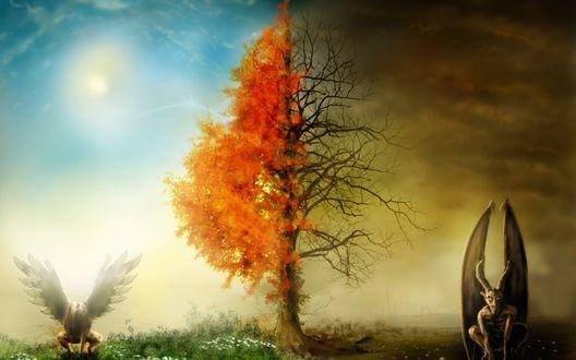 Обои Дерево разделяющее два мира, с темного мира с темным демоном, дерево черное и небо пасмурное, со светлого мира с белым Ангелом, дерево живое и с листьями, небо светлое и голубое, светит Солнце, зеленеет трава