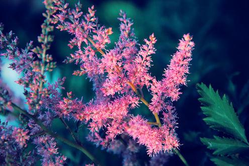 Обои Розовые весенние цветы на ветке