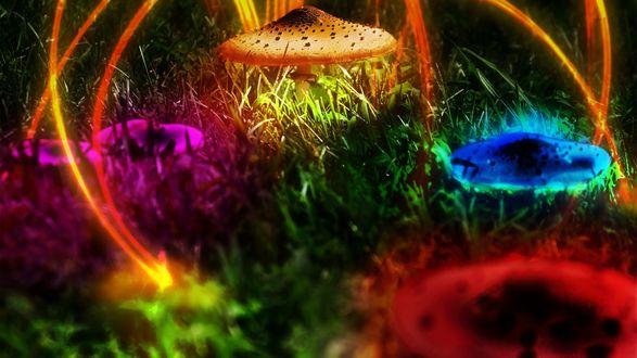 Обои Разноцветные грибы с абстрактными светящимися линиями