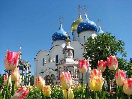 Обои Распустившиеся тюльпаны у Свято Троицкой Сергиевой Лавры. Московская область город Сергиев Посад