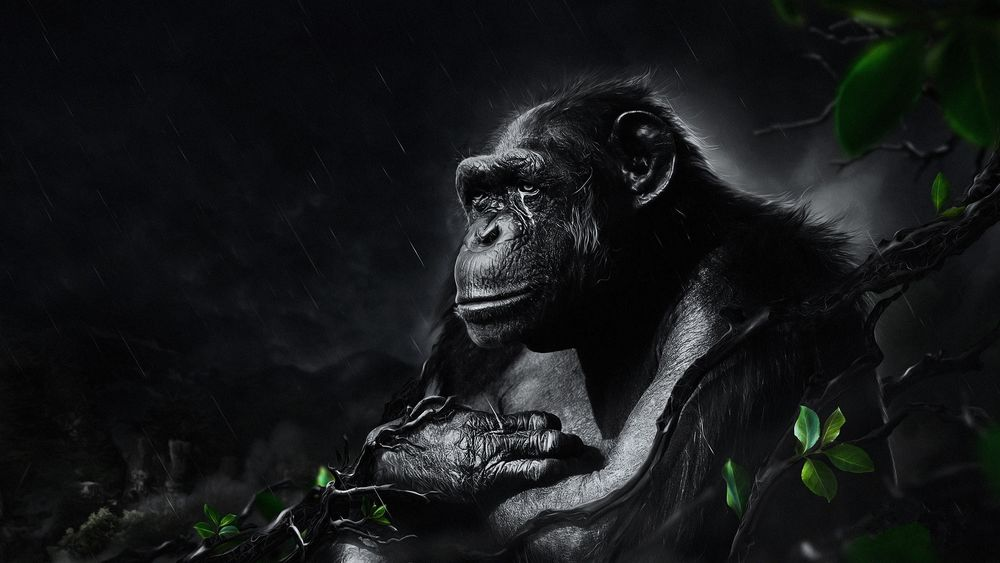 Обои для рабочего стола Кинг-Конг / King Kong/— один из самых популярных персонажей одноименного фильма, гигантская доисторическая горилла сидит под дождем среди веток деревьев