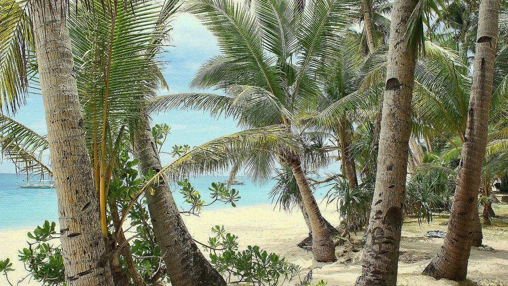 фото голой девушки в пальмовой роще фото