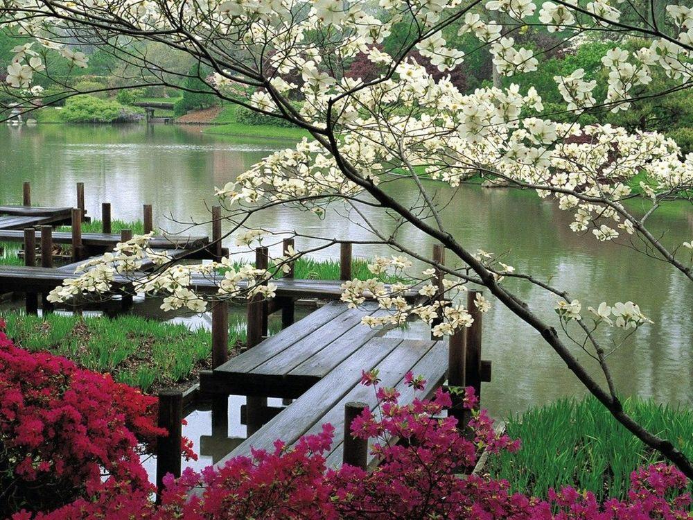 Весна япония обои на рабочий стол