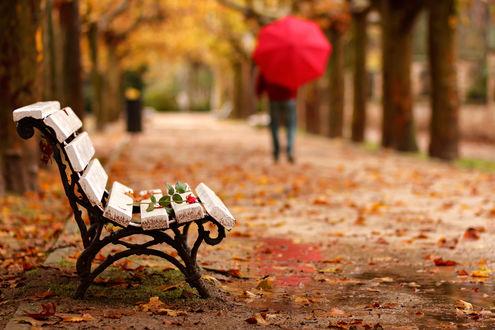 Обои Человек, держащий в руке красный зонт, идущий по осенней аллее парка с лежащей на скамейке розой