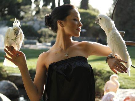 Обои Даша Астафьева с попугаями