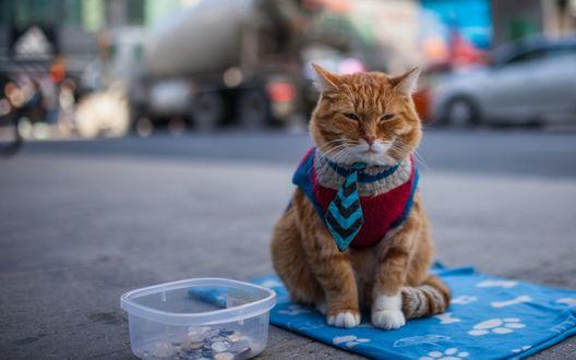 Обои Рыжий кот с хитрой мордой в жилетке и галстуке сидит на подстилочке среди улицы, рядом коробочка для сбора подаяния