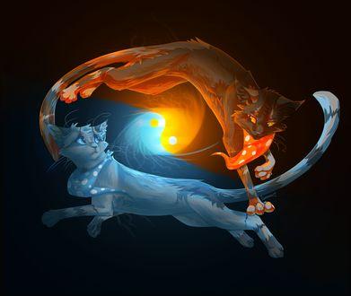 Обои Голубая и рыжая кошки образуя символы противоположностей, огня и воды, инь и ян