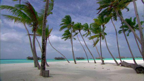 Анна сбитная на тропическом острове