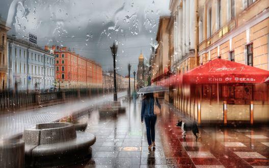 Обои Девушка под зонтом и собака идут по дождливой улице Санкт - Петербурга