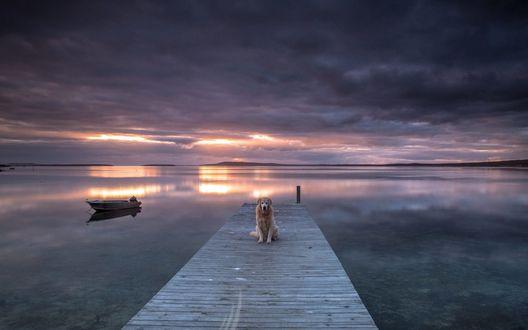 Обои Пес сидит на пирсе на фоне гладкого озера и лодки