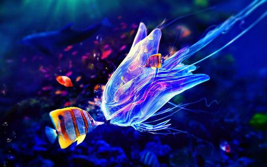 Обои Красивые рыбки плавают возле медузы