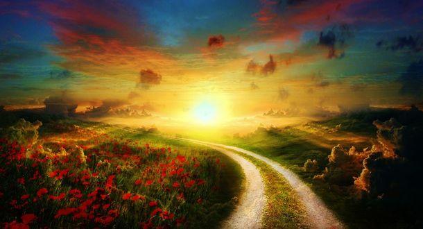 Обои Красивый закат над дорогой между полями с маками