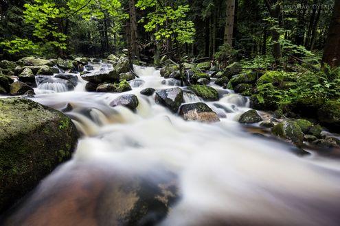 Обои Река с каменистыми порогами в лесу, by dybcio