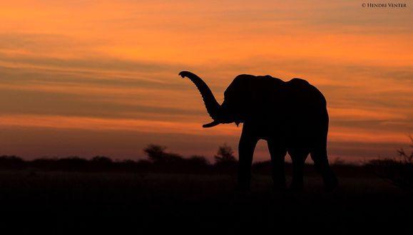 Обои Силуэт слона на фоне неба