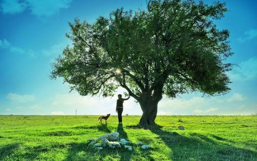 Обои Девушка с собакой стоят на поляне у дерева