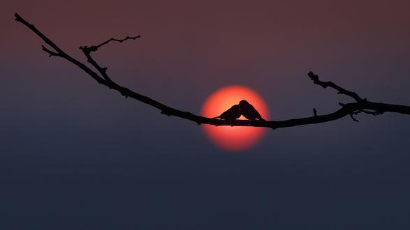 Обои Две птички сидят на веточке в диске солнца на закате