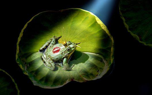 Обои Лягушка в короне сидящая на листке кувшинки