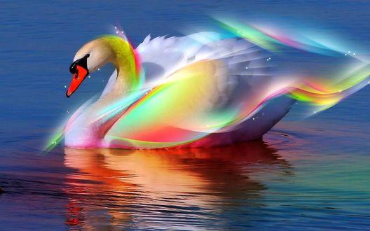 Обои Лебедь в радужном сиянии