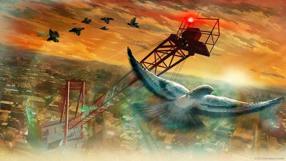 Обои Птицы парят в небе над городом
