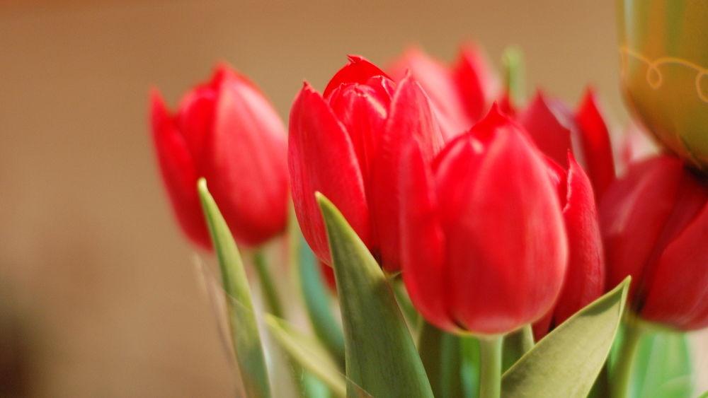 Обои для рабочего стола Красивые яркие тюльпаны