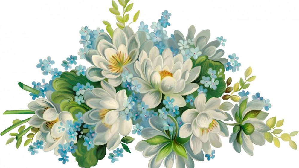 картинки на белом фоне цветы