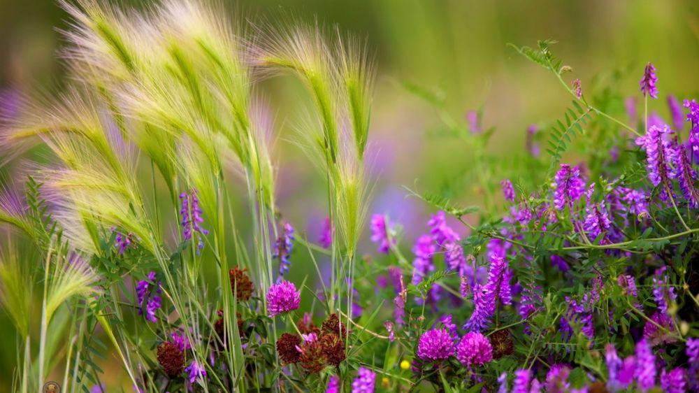 Фотообои цветы полевые