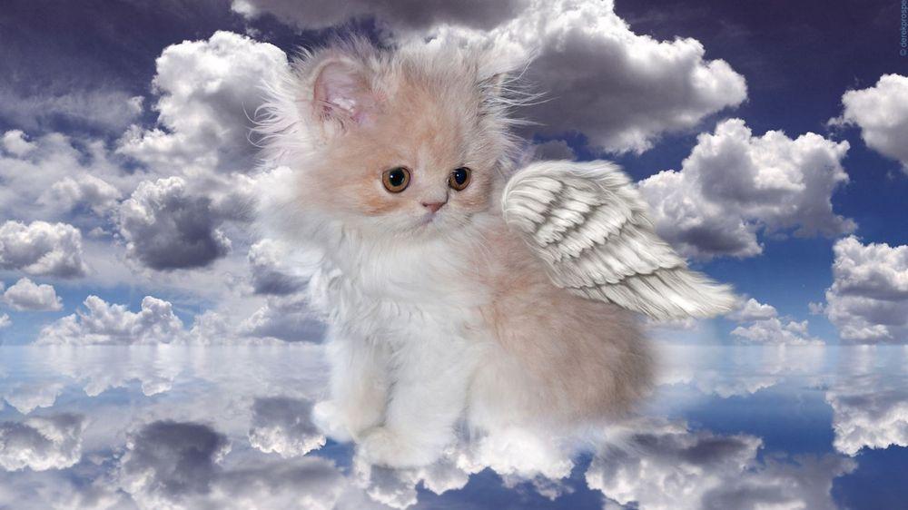 Обои для рабочего стола Котенок-ангел с крылышками на фоне облаков в небе