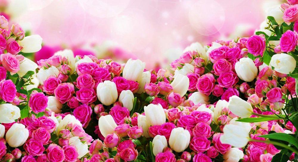 Обои для рабочего стола Белые тюльпаны и розовые розы