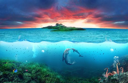 Обои В морской глубине недалеко от острова, среди выглядывающего осьминога и стайки рыб, резвятся малыш дельфин с мамой