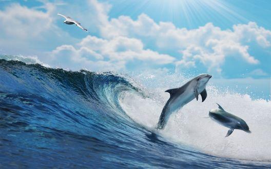 Обои Из морской воды выпрыгивающие дельфины и белая чайка над волной