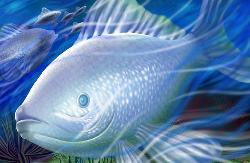 Обои Серебряные рыбы под водой