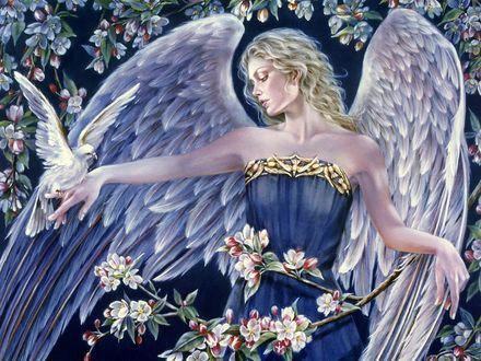 Обои Девушка ангел с голубем на руке