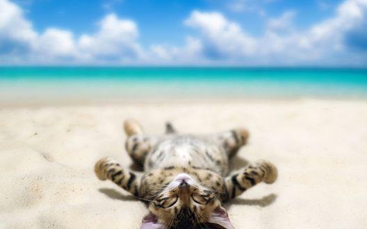 Обои Полосатый котенок лежит на песке, на берегу моря