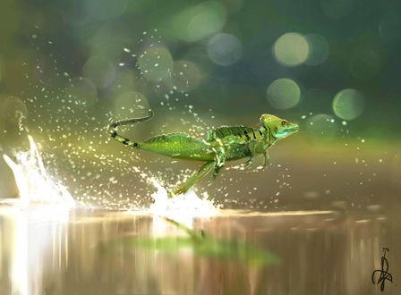 Обои Ящерица бежит по воде