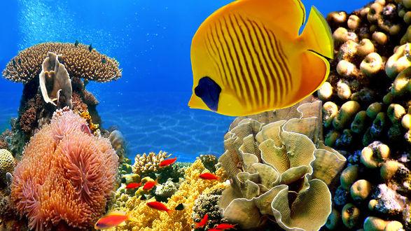 Обои Рыбы под водой