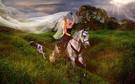 Обои Девушка с белой вуалью в руке скачет на лошади по полю, следом за ними бежит собака