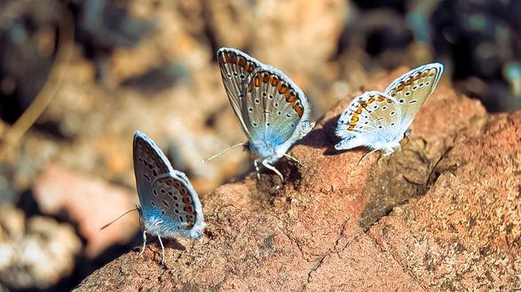 Обои Бабочки на камне