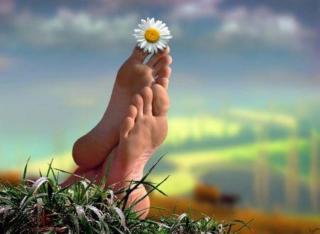 Обои Ромашка на пальчике ног, фотохудожник Igor Zenin