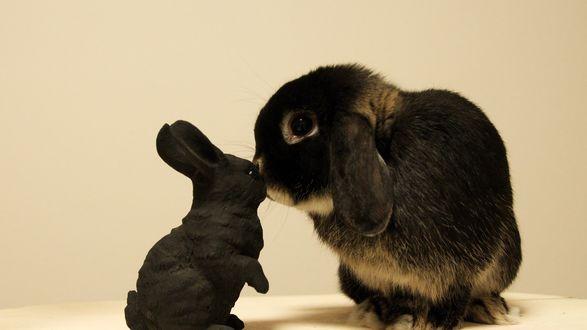 Обои Кролик и фарфоровый черный заяц